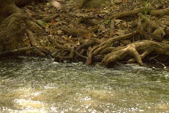 Photo: A healthy stream that was almost dry.