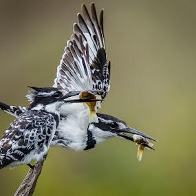 by Anton La Grange - Animals Birds