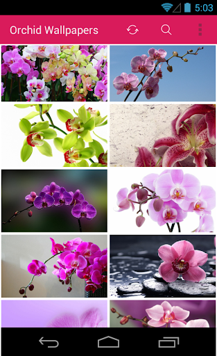 Orchid Flower Wallpapers