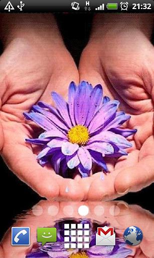 Purple Daisy Live Wallpaper