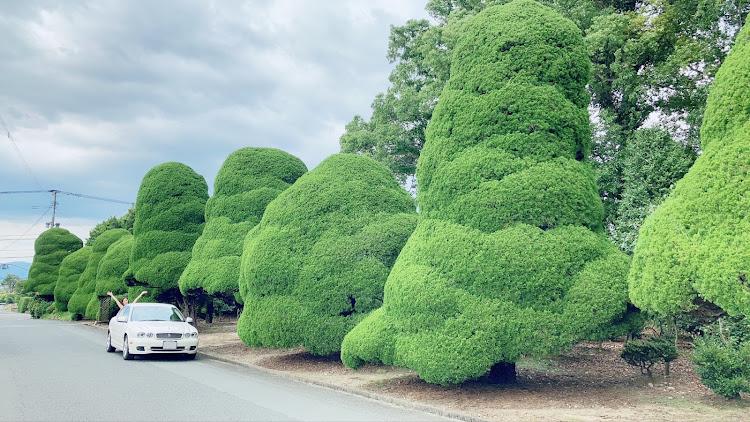 Xタイプ セダン の結婚式へ,面白い木,愛車と風景,幸せな時間,福岡に関するカスタム&メンテナンスの投稿画像3枚目