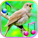 Bird Sound Ringtones & Wallpapers 1.1 APK ダウンロード