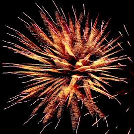 FIREWORKS by Jennifer  Loper  - Public Holidays July 4th ( gold, red, orange, july 4, fireworks )