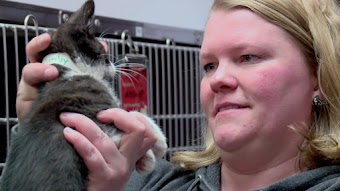 Kitten Impossible: Roadtrip Rescue