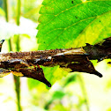 tree hopper