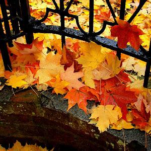 autumn intensity.jpg