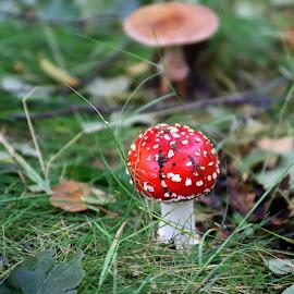 Life by Gil Reis - Nature Up Close Mushrooms & Fungi ( mushrooms, macro, nature, portugal, bio, life )