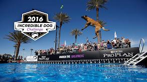 2016 Incredible Dog Challenge thumbnail
