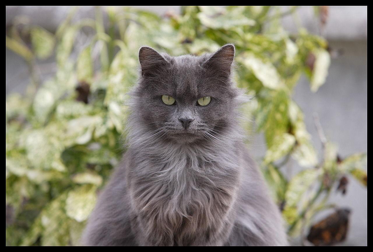 feirce kitty