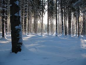 Photo: 03.Zimowy las: okolice Slanej Vody.