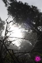 Photo: ...Y en los lugares más tenebrosos del bosque...