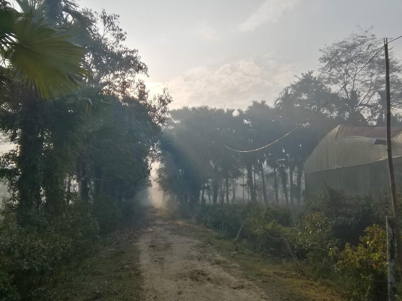 お茶畑付近の風景