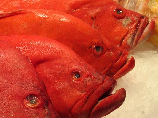 Red Pescion (e le sue sfumature) di gadani's idea