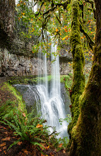 Photo: Autumn is Coming!!!  Oregon is a waterfall playground and Silver Falls State Park is the swing set on that playground. It's hugely popular and often you have to wait your turn for a ride. Yesterday I got up at 5am to drive down to see these falls and let me tell you, the early bird truly does get the worm. I didn't see another person for the first two hours I was there. I was on that proverbial swing for a long time without another kid bugging me for a turn.  This is three shots stitched together of the Lower South Falls. In the foreground is one of the beautiful moss covered trees that add to the majestic beauty of this State Park. If you look close enough you'll see a rock wall behind the falls, that is the path and you get to walk behind the falls.  The signs of Autumn were all around and you can see some of the leaves already starting to turn. It's my favorite time of year!  #waterfalls  #oregonlandscapephotography  #oregon