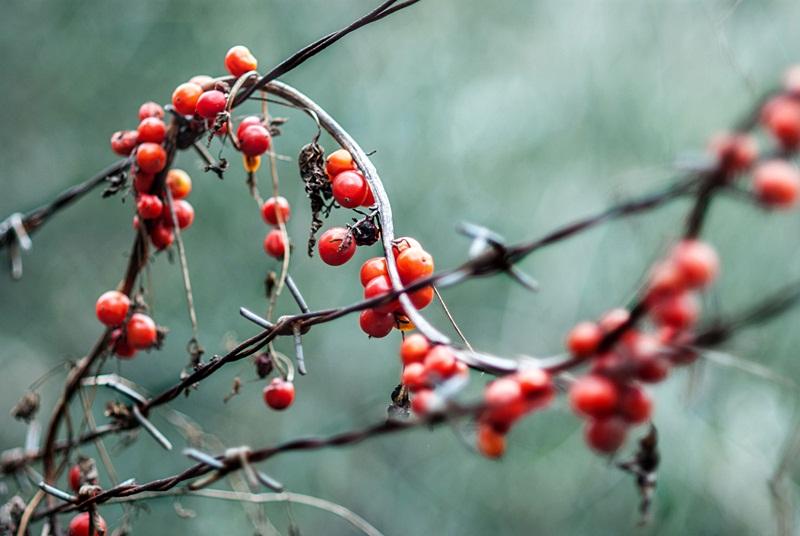 rosso di bosco di luisa_navalesi