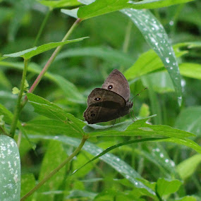 Butterfly by Abhishek Mestry - Animals Insects & Spiders ( butterfly, green, dewdrops, forest, leaf )