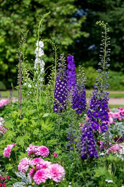 Ogrody w Nieborowie, kwiaty