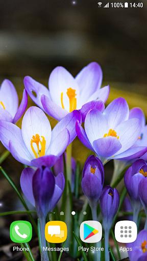Beautiful Spring Flowers Live Wallpaper 1.0.7 screenshots 1