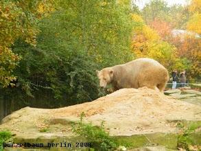 Photo: Knut umrundet seinen Sandhaufen ;-)