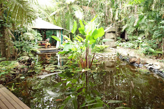 Photo: Rainforest Hideaway scenic. Well-tended property situated right in the rainforest- Tight squeeze to get the car in through all the close trees!