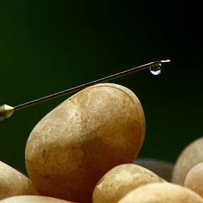 by Sandip Ray - Novices Only Objects & Still Life
