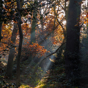 Ray of light by Augustin Galatanu - Landscapes Forests ( beams of sunlight, trees, forest, landscapes, pwcsunbeams )