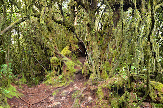 Photo: Mossy forest...straight out of LOTR