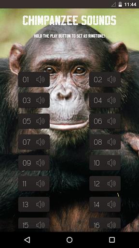 Chimpanzee Sounds