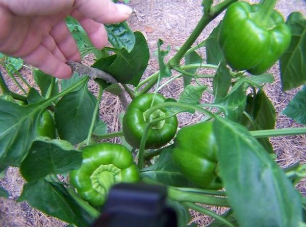 Helene's Kitchen Garden Recipe