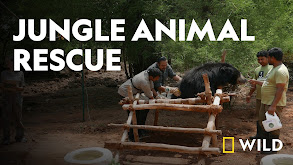Jungle Animal Rescue thumbnail