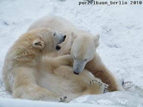Photo: Eisbaerige Diskussion im Schne ;-)