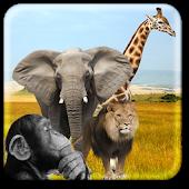 Zoo Live Wallpaper