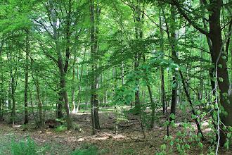 Photo: Slagslunde Skov