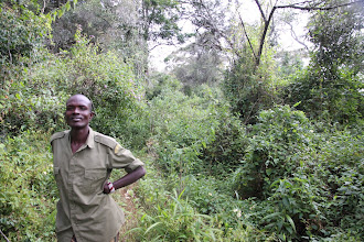 Photo: Kai on our forest hike the next day - following an elephat path