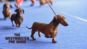 The Westminster Pre Show thumbnail