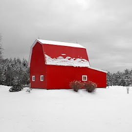 Bright Red Barn by Lena Arkell - Buildings & Architecture Other Exteriors ( red, cloudy, field, barn, snowfall, snow, winter,  )