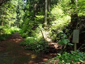 尾根道の登山口(林道出合)