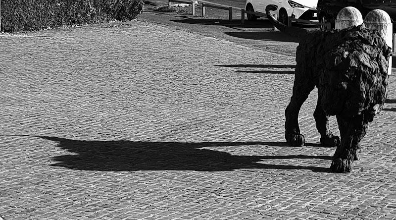 guardingo verso la sua ombra di Bobp