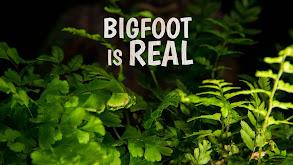 Bigfoot is Real thumbnail