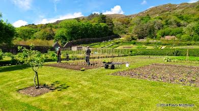 Photo: Luostarin puutarhaa hoidetaan.