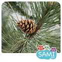 Sami Tiny Flash Cards Forest Adventures for kids icon