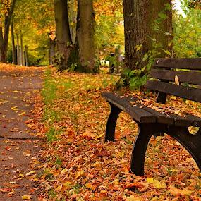 Restless by Abhinav Ganorkar - City,  Street & Park  City Parks ( city parks, autumn leaves, autumn, parks, landscape,  )