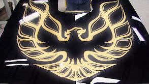 Beautiful Black Bird thumbnail