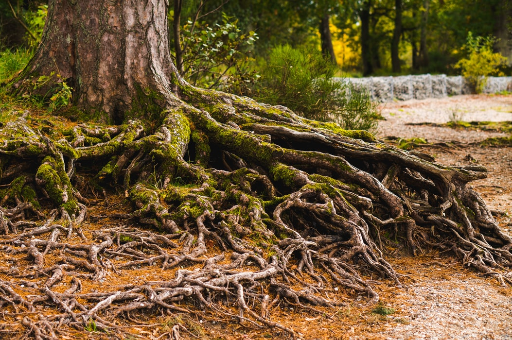 The roots of your SEO are grounded in the structure of your website.