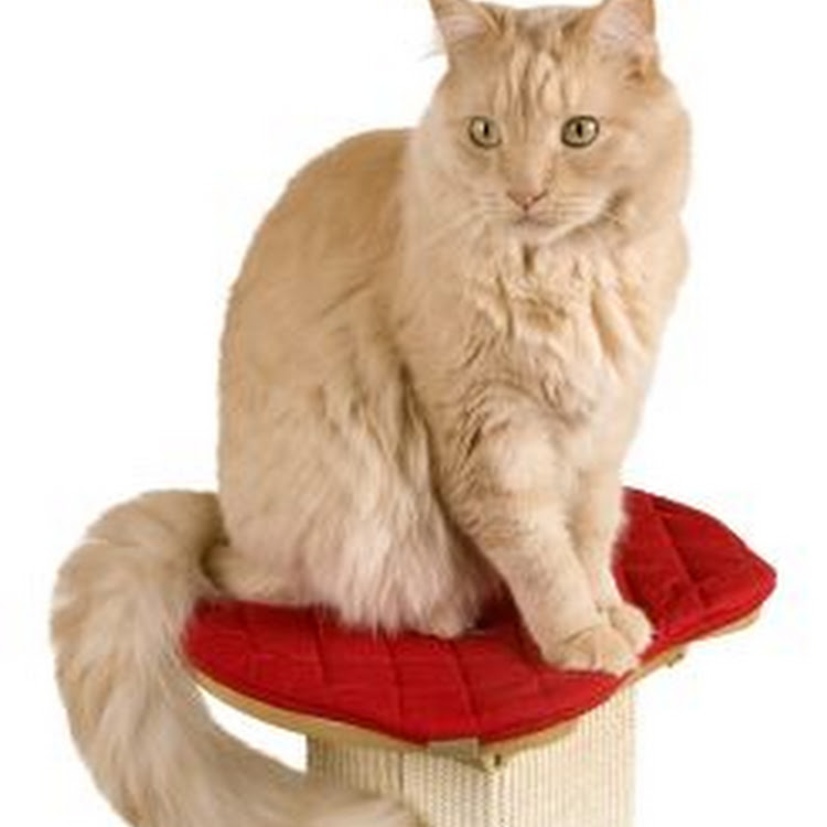 SmartCat Ultimate Post Perch by Pets Manic