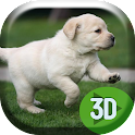 Cute Labrador Puppies Running icon