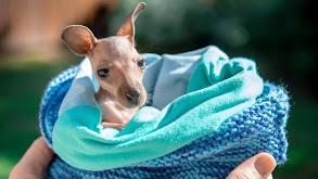 Australia Zoo Begins Again thumbnail