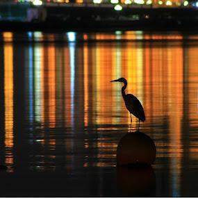 by Rami Asaad - Animals Birds