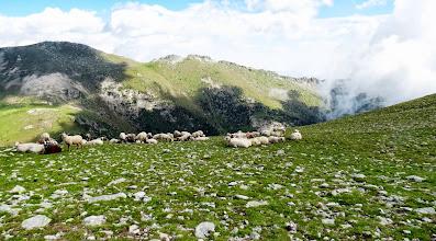 Photo: l'amorriador des moutons et les Esquerdes au Fond