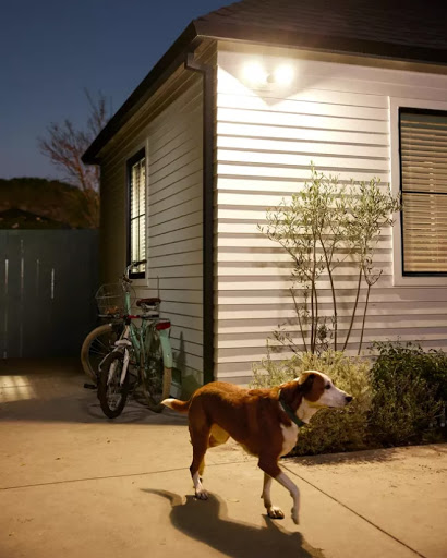 Nest Cam with floodlight captures a dog walking around the outside of a home.